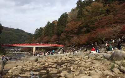 What to Do in Nagoya in Autumn