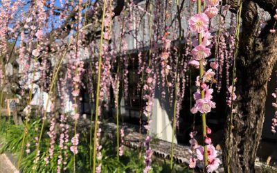 What to Do in Nagoya in Spring
